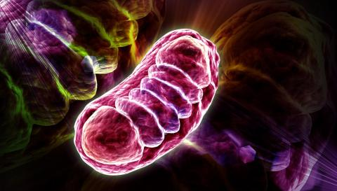 Mitochondrie, énergie cellulaire, biologie cellulaire, LineQuartz