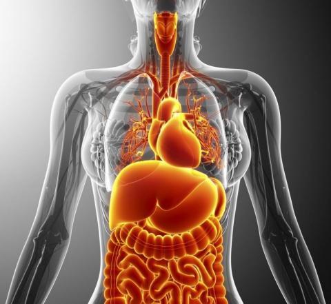 médecine vibratoire, interstitium, circulation énergétique, Collagen bundles,